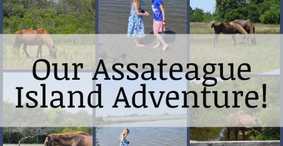 Our Assateague Island Adventure