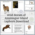 Wild Horses of Assateague Island Lapbook
